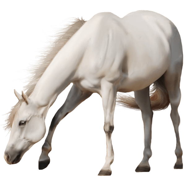 Download white png image. Horse clipart transparent background