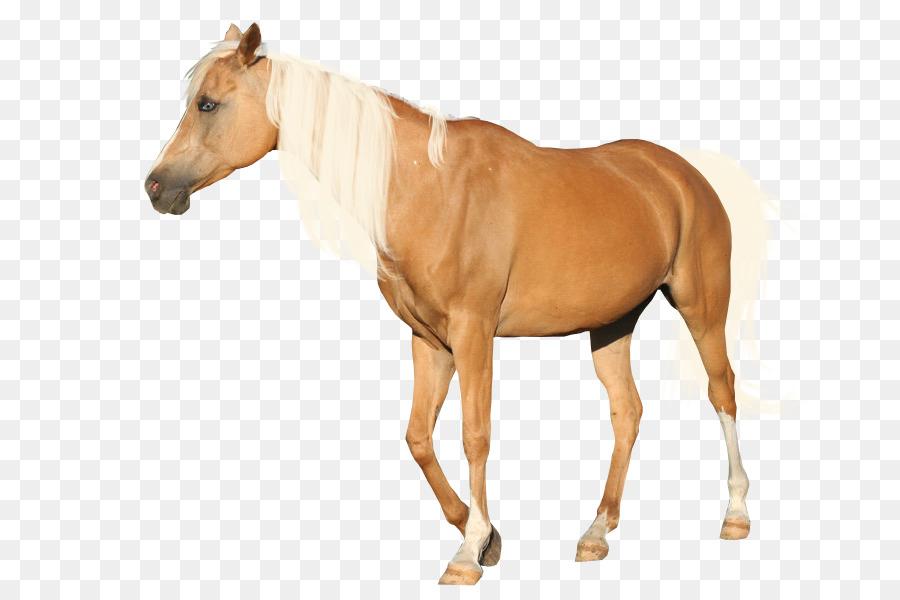 Horse clipart transparent background. Cartoon clip art