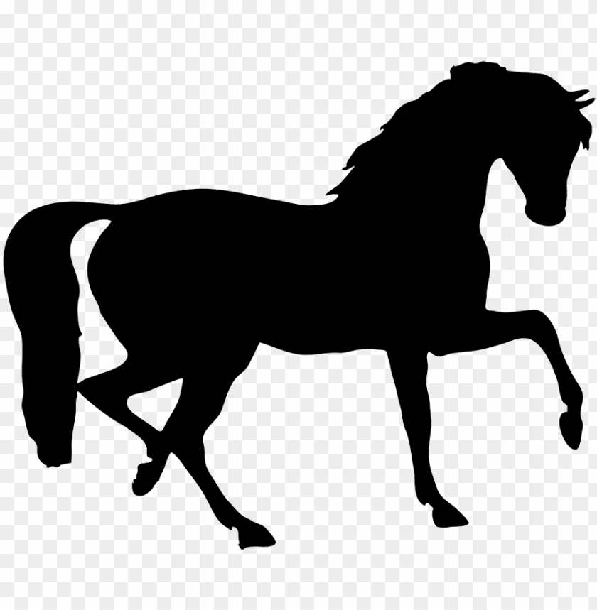 Stallion silhouette png image. Horse clipart transparent background