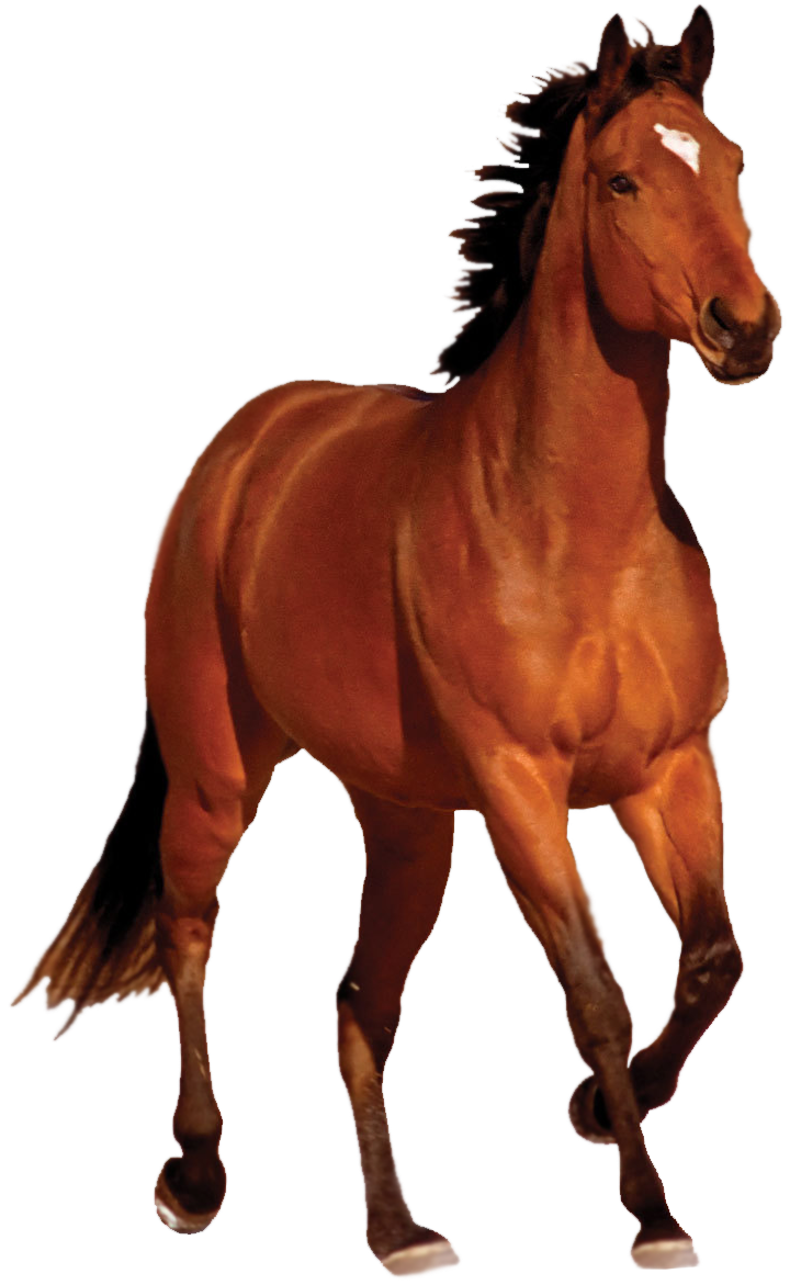 Horse png by captainjackharkness. Horses clipart trot