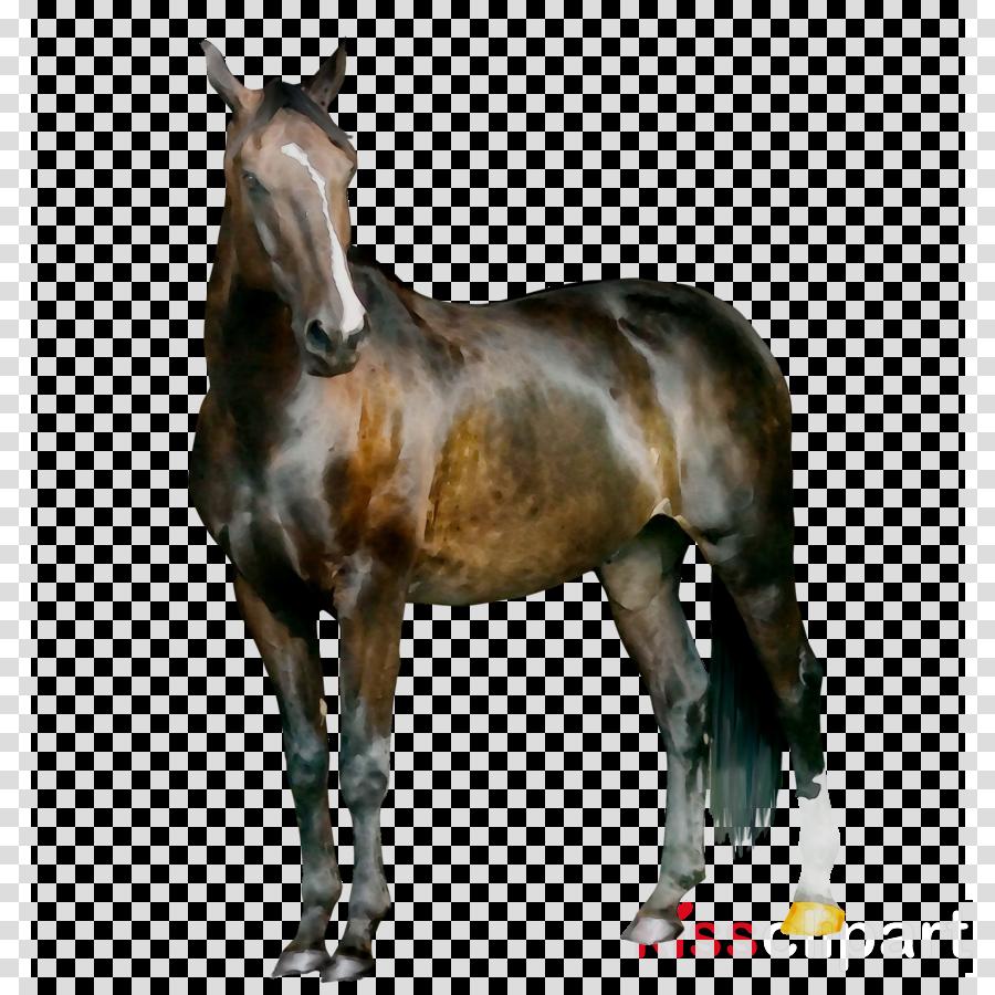 Horse cartoon transparent clip. Horses clipart dog
