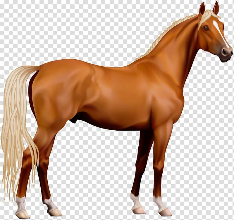 Horses clipart file. Horse computer illustration transparent