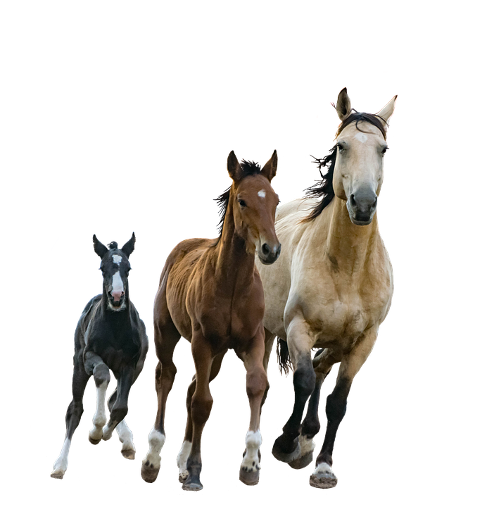 Horses clipart foal. Png hd transparent images
