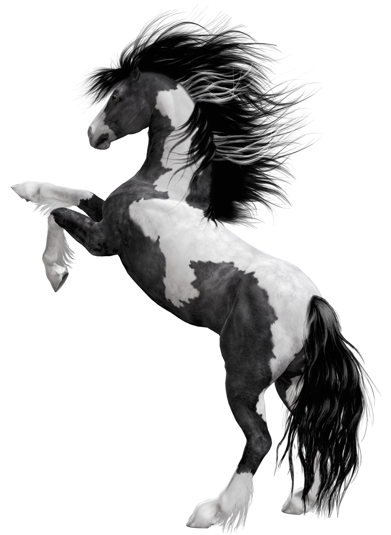 Black white horse png. Horses clipart muscular