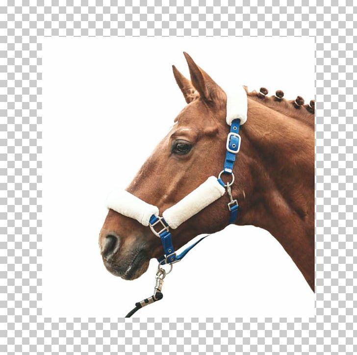 Horse halter making equestrian. Horses clipart rope