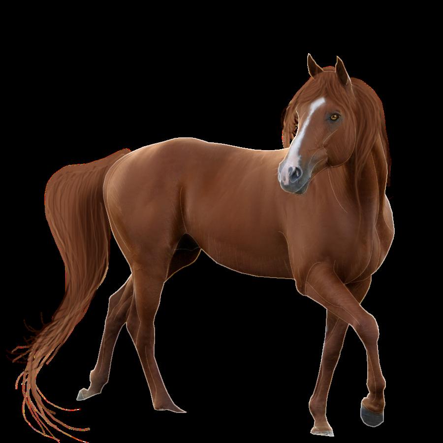 Horse transparent background frames. Horses clipart simple