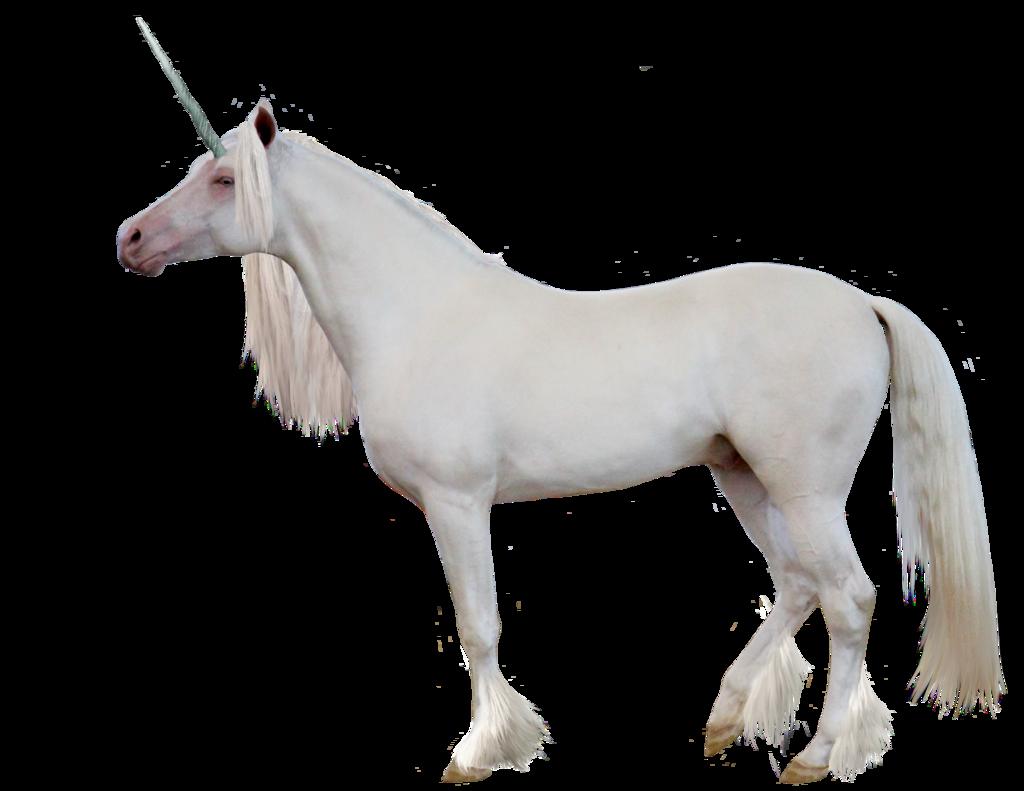 Png transparent images all. Horses clipart unicorn