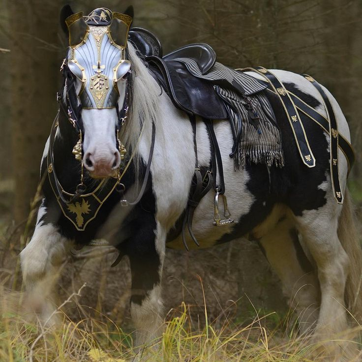 Pin on equine fetish. Horses clipart war horse