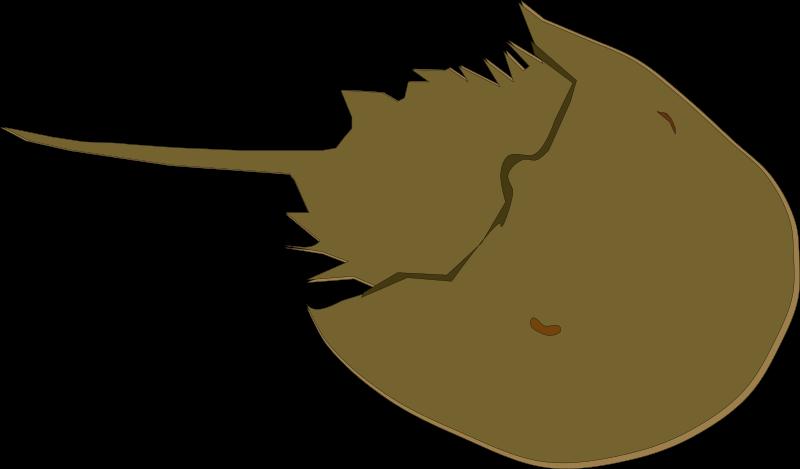 Horseshoe clipart brown. Crab medium image png
