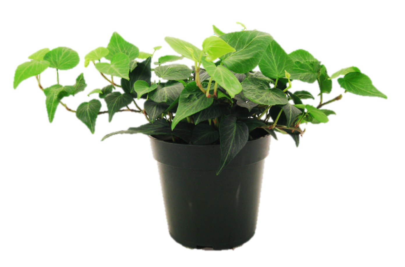 House plant png. Image houseplant warehouse artifact
