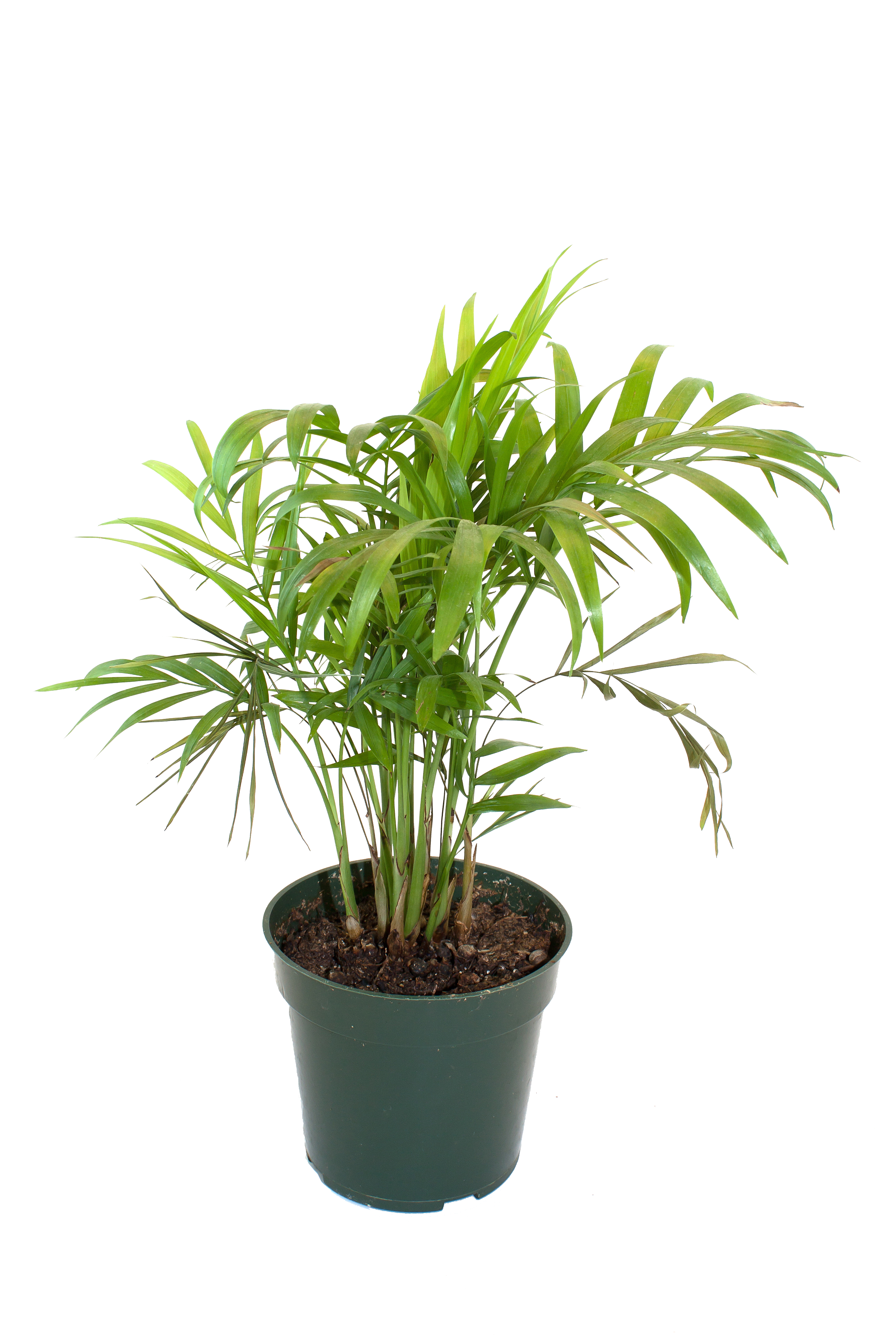 House plant png.  for free download
