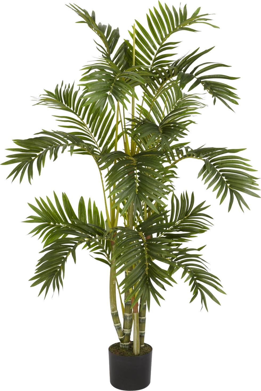 House plant png. Plants transparent free images