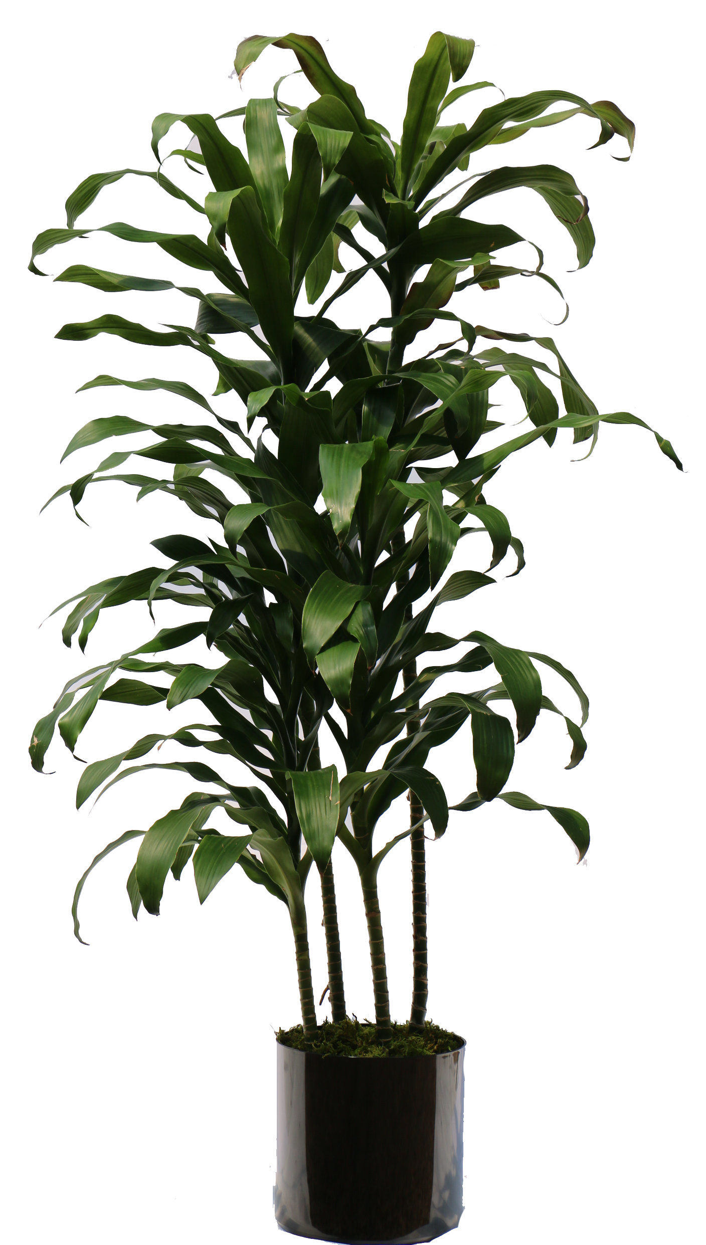 House plant png.  indoor for free