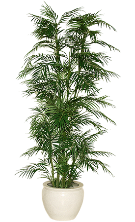indoor for free. House plant png