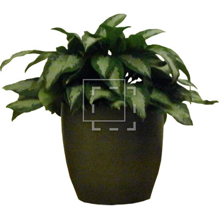Potted immediate entourage. House plant png