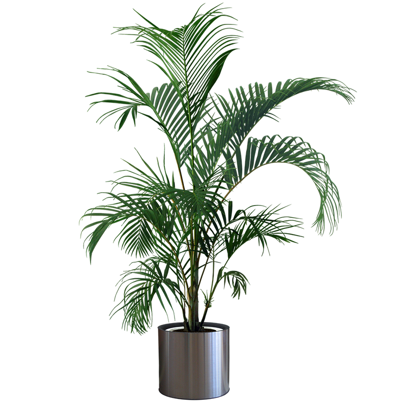 House plant png. Houseplant flowerpot gardening tree