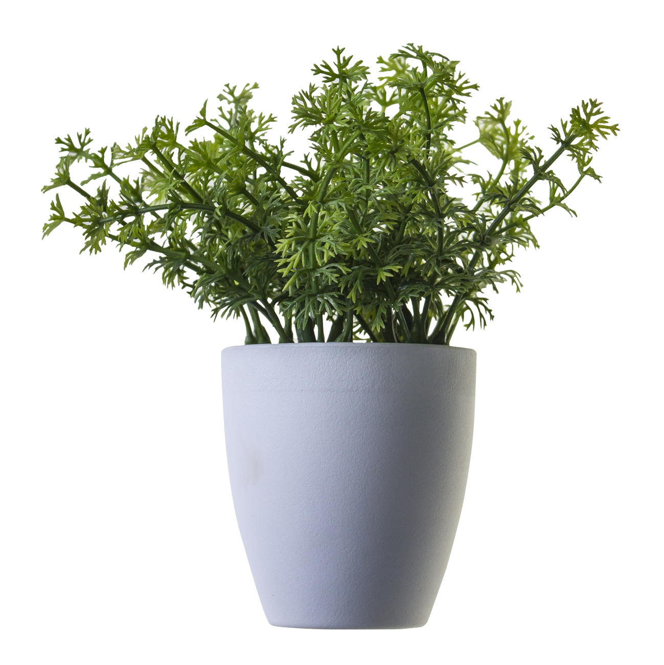 Image potted flower free. House plant png