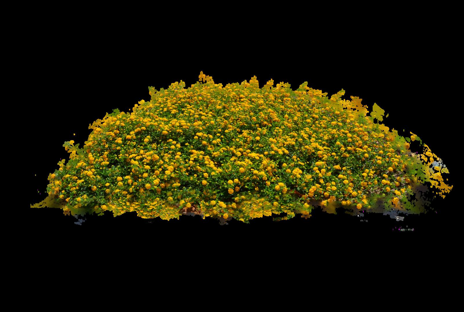 Bush view free icons. Flower plant png