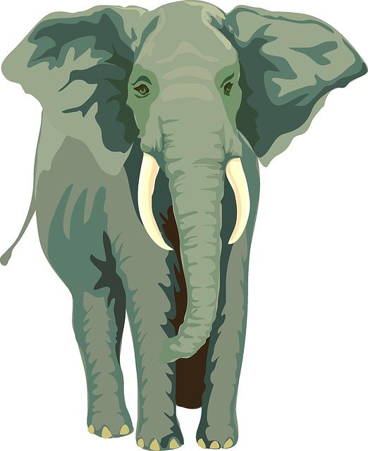 Free photo baby isolated. Hug clipart elephant