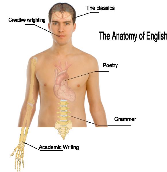 Human clipart anatomical body. Anatomy basics clip art