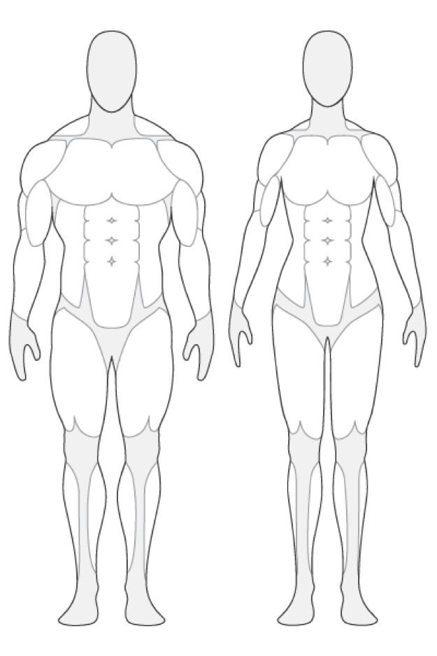 Anatomy outline muscle tendernessco. Human clipart anatomical body