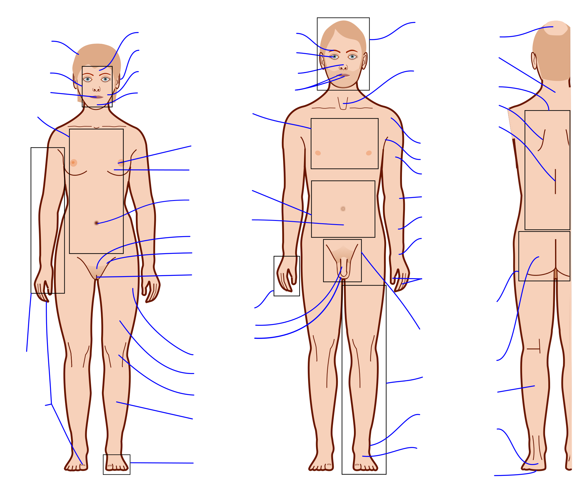File features with labels. Human clipart blank body