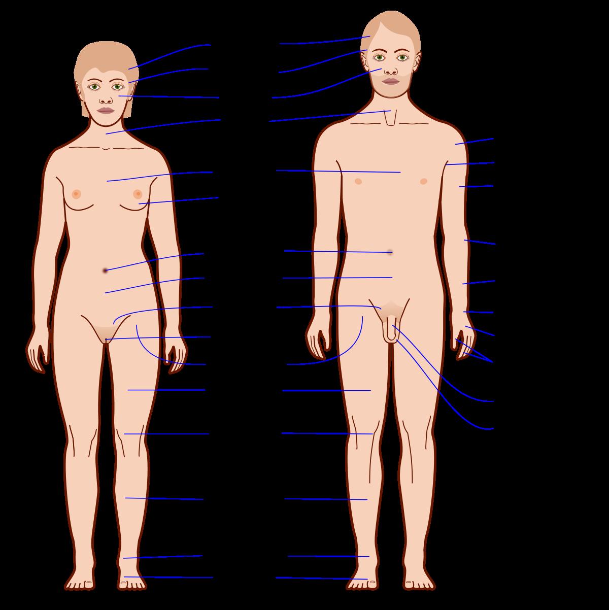 Neck clipart body part. Parts images lifeinharmony