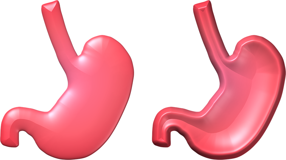 Png hd transparent images. Stomach clipart chyme