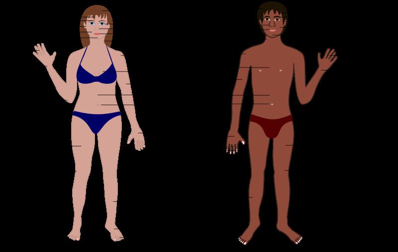 Free clip art body. Human clipart human being