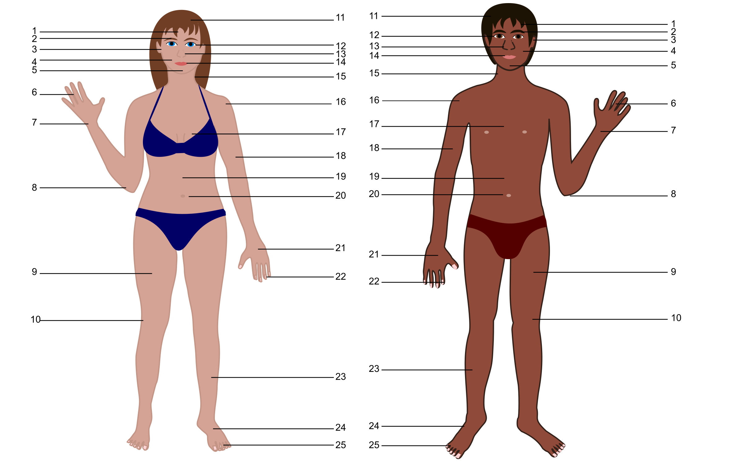 Both genders with numbers. Human clipart human body
