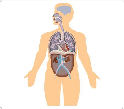 Human clipart human body. Look at clip art