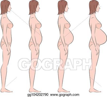Vector art pregnant woman. Pregnancy clipart side view