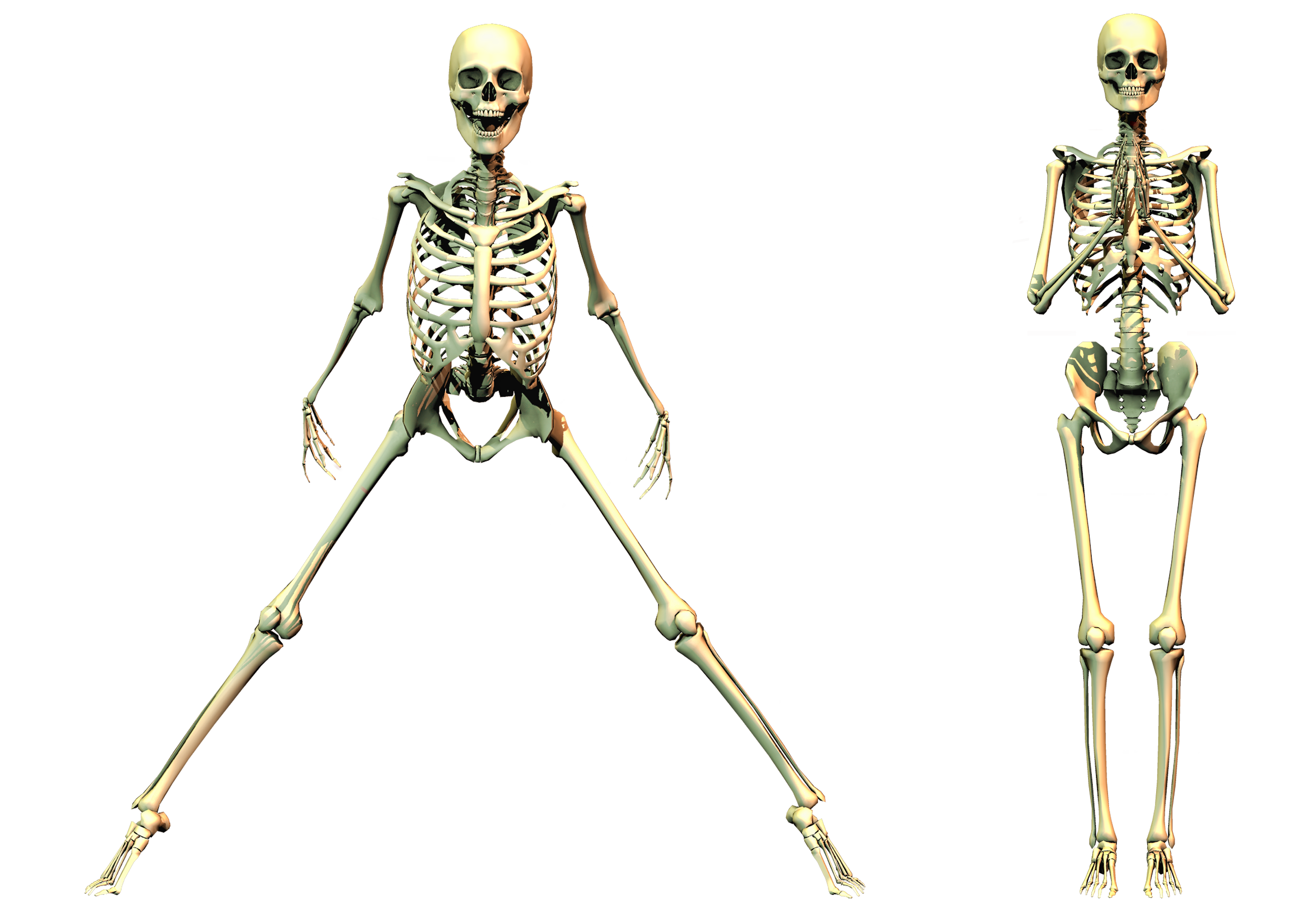 Skeleton worshiping by markopolio. Human clipart ribcage