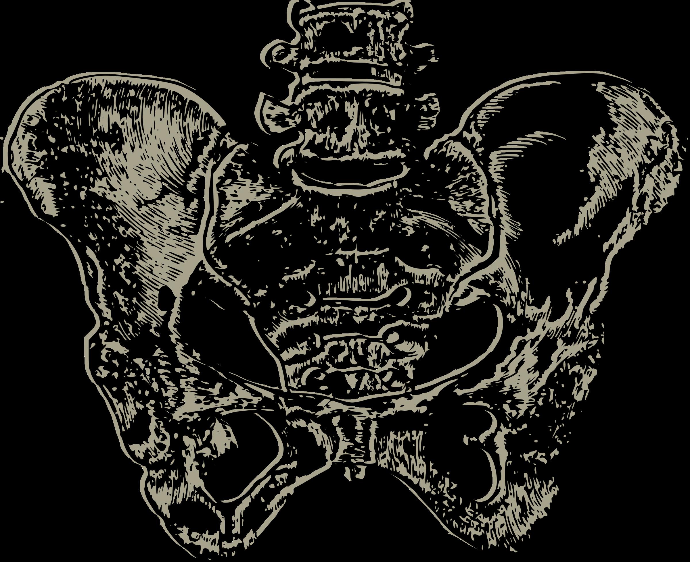 Complete pelvic bone icons. Human clipart svg