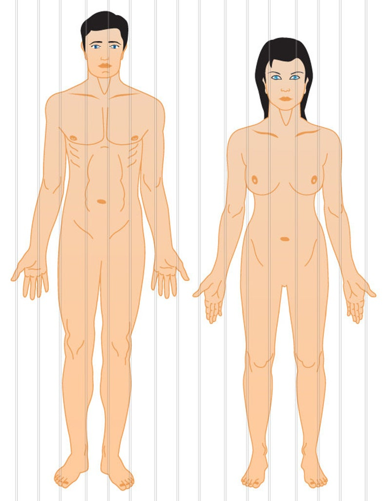 Clip art high resolution. Humans clipart human anatomy