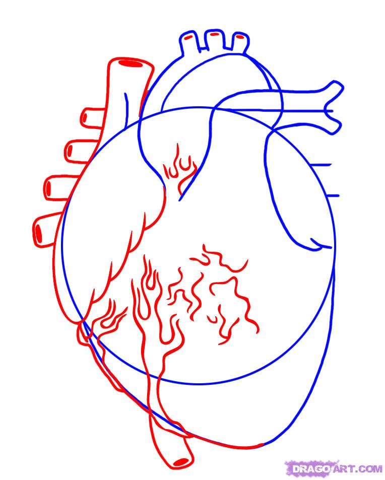 Free human heart sketch. Humans clipart step
