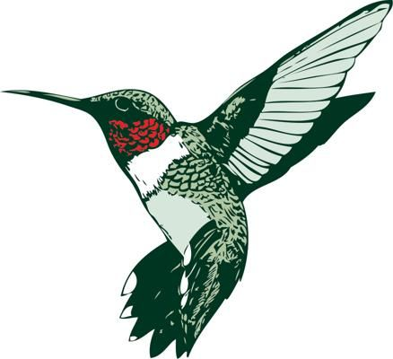 Ruby throated humminhbirds pinterest. Hummingbird clipart