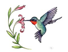 Free cliparts co celebrations. Hummingbird clipart