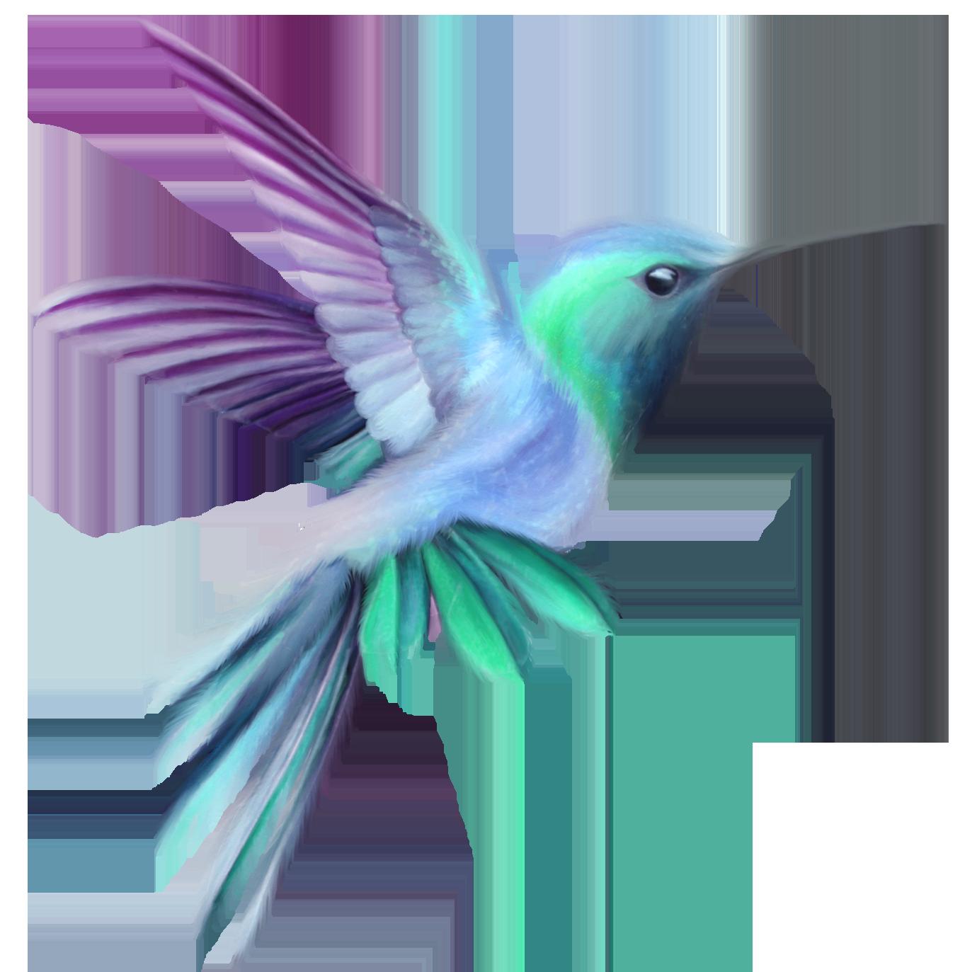 Transparent clip art image. Hummingbird clipart