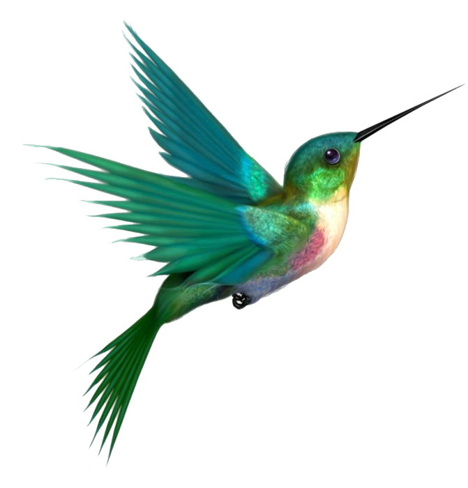 Hummingbird clipart animated.  collection of png