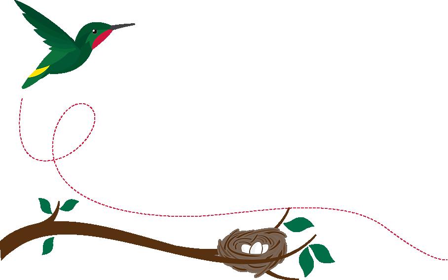 Infographic all about hummingbirds. Hummingbird clipart anna's hummingbird