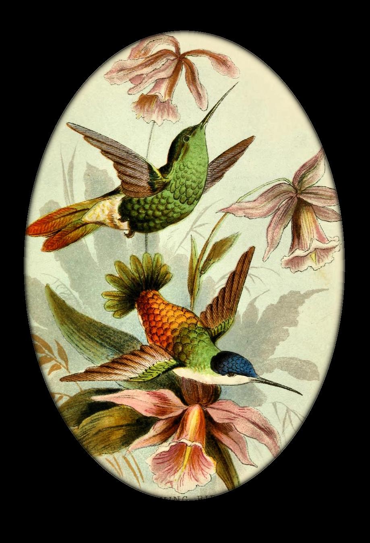 Vintage hummingbirds from create. Hummingbird clipart anna's hummingbird