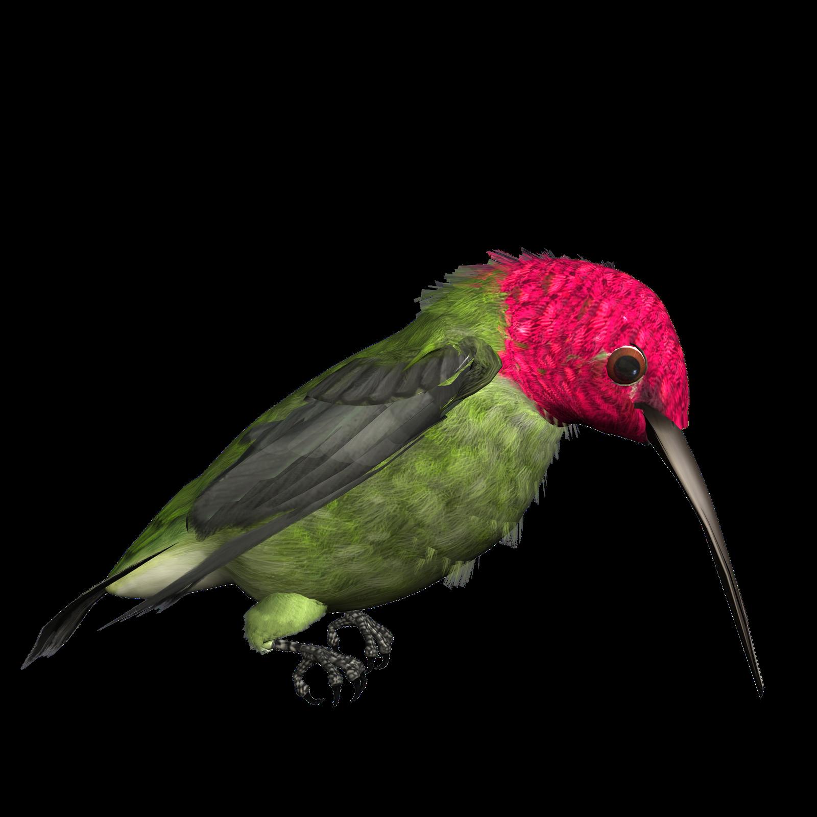 Panda free images hummingbirdclipart. Hummingbird clipart anna's hummingbird