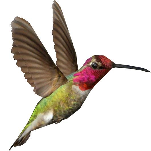 Transparent free download best. Hummingbird clipart anna's hummingbird
