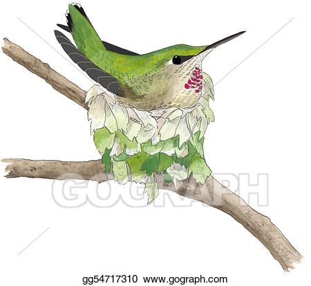 Hummingbird clipart anna's hummingbird. Stock illustration annas gg