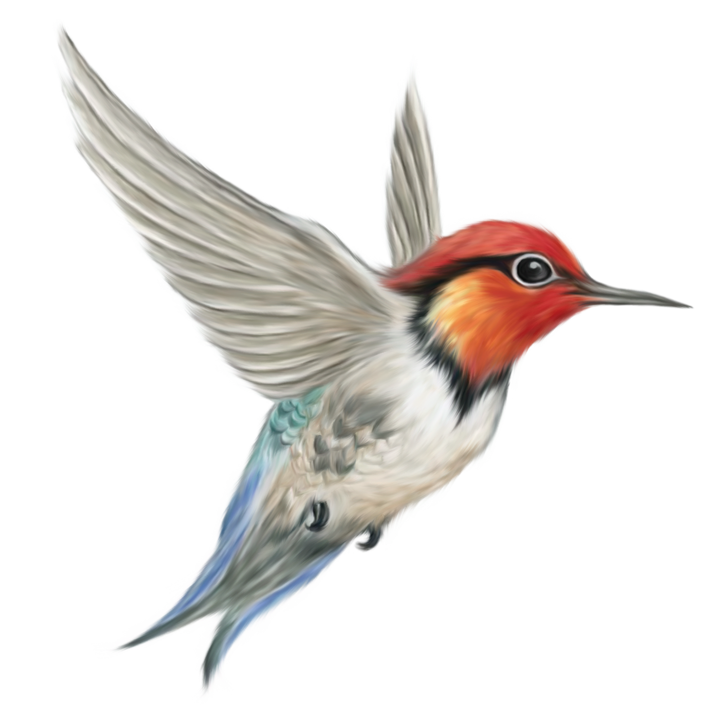Hummingbird clipart anna's hummingbird. Images yahoo image search