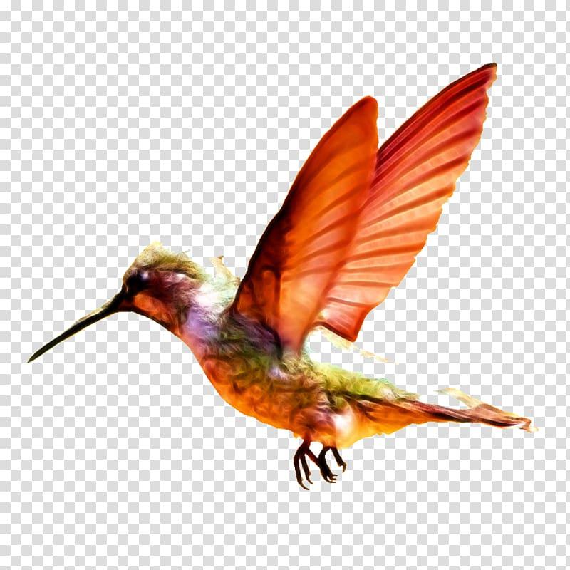 Charming transport infant orange. Hummingbird clipart baby hummingbird