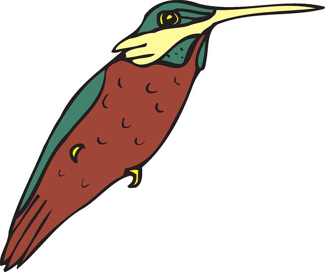 Wings art beak feathers. Hummingbird clipart beautiful bird