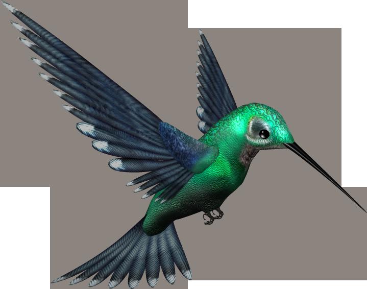 Hummingbird clipart beautiful bird. Png transparent images all