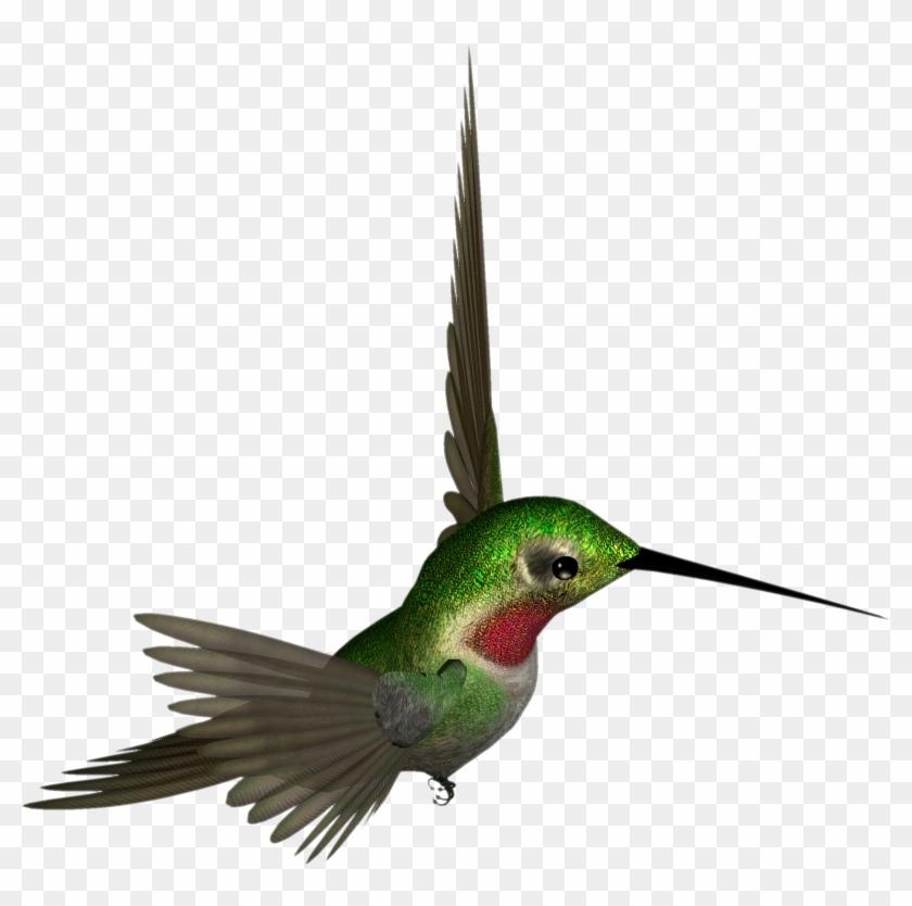 Hummingbird clipart beautiful bird. Transparent